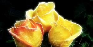 Hechizo De La Rosa Amarilla