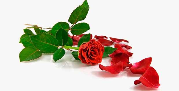 Conjuro De Amor Espina De Rosa